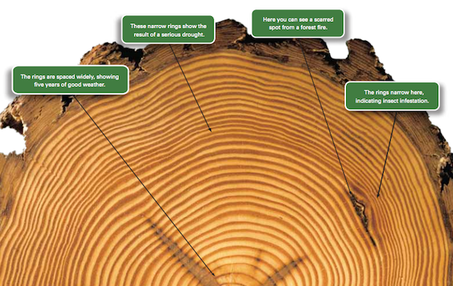 what is tree ring dating Find the perfect tree ring dating stock photo huge collection, amazing choice,  100+ million high quality, affordable rf and rm images no need to register, buy .